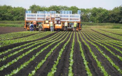 New Machine Learning Platform to Help Harvests
