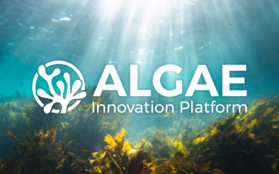 The Future Is Algae – And We Are Here for It!